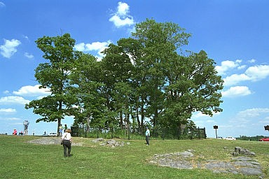 "The ""clump of trees."" A close-up view from the Confederate lines as they drew near. The grove of trees is preserved by replanting periodically (copyright Allen Goodall 2003)"